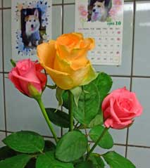 20081030birth_rose